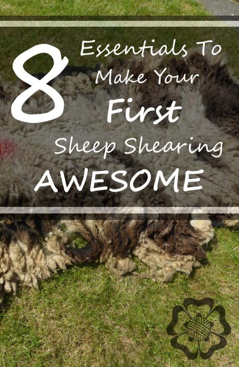 8 Essentials to Make your First Sheep Shearing Awesome Pinterest